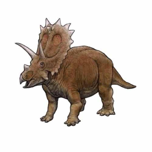 Anchiceratops Dinosaurier