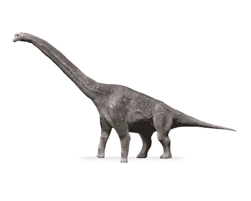 Giraffatitan Dinosaurier