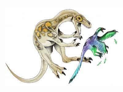 Ornitholestes Dinosaurier