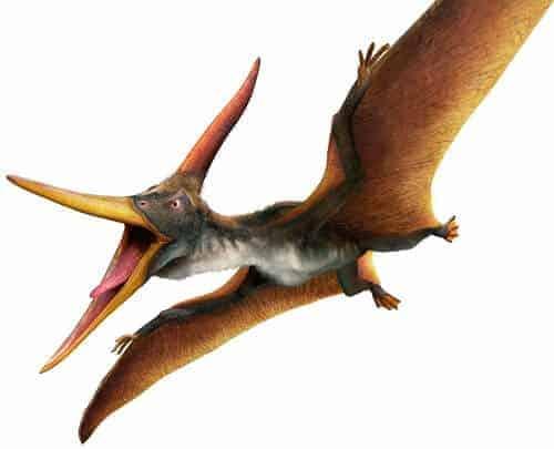 Pteranodon Dinosaurier