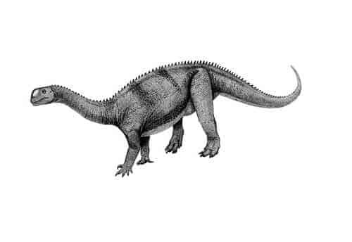 Yimenosaurus Dinosaurier