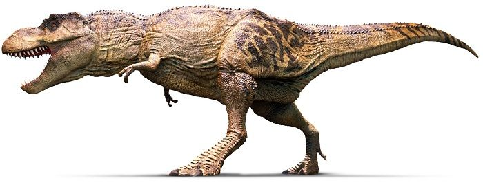 Tyrannosaurus Rex Bild