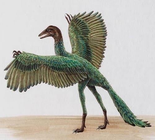 Archaeopteryx Dinosaurier