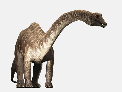 Diplodocus Dinosaurier