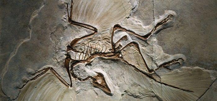 Was Bedeutet Fossil