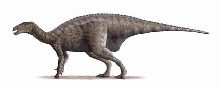 Iguanodon Bild