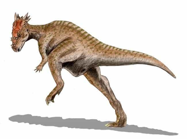 Dracorex Harry Potter