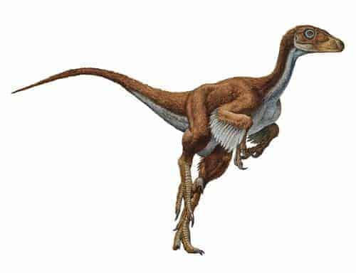 Dromaeosaurio Dinosaurier